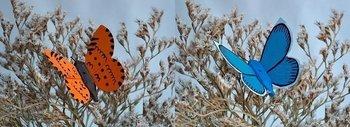 Schmetterlinge - Set